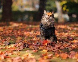 : Кот в опавших листьях
