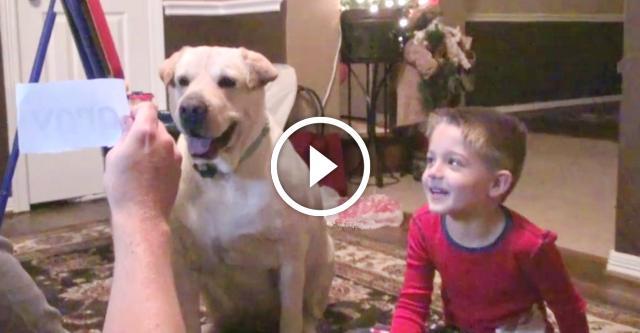 180 секунд, которые докажут вам, что собаки — самые невероятные существа во всем мире!