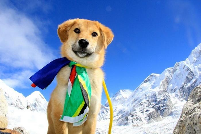 Пес-альпинист: невероятная история дворняги, покорившей Эверест