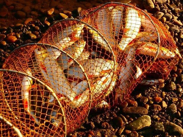 Хитрости с прикормом, которые сделают всю рыбалку