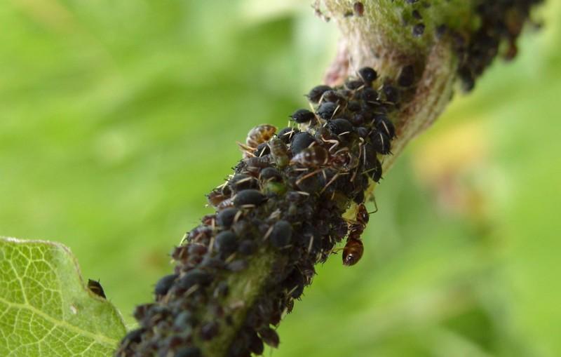 Маранта. Уход и размножение цветка черенками. Как правильно ухаживать за Марантой Интересный сайт, полезные советы