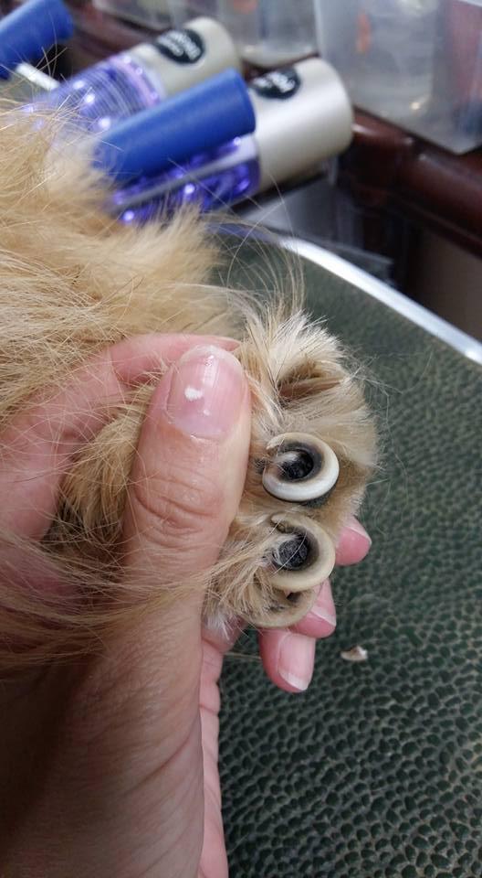 """Когда собаке не стригут когти, потому что """"сами сточатся""""."""