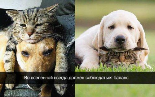 http://mtdata.ru/u5/photoB599/20868248441-0/original.jpg#20868248441