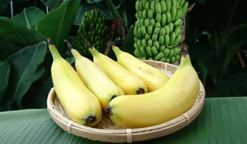 Съешь меня полностью: японские ученые выращивают бананы со съедобной кожурой