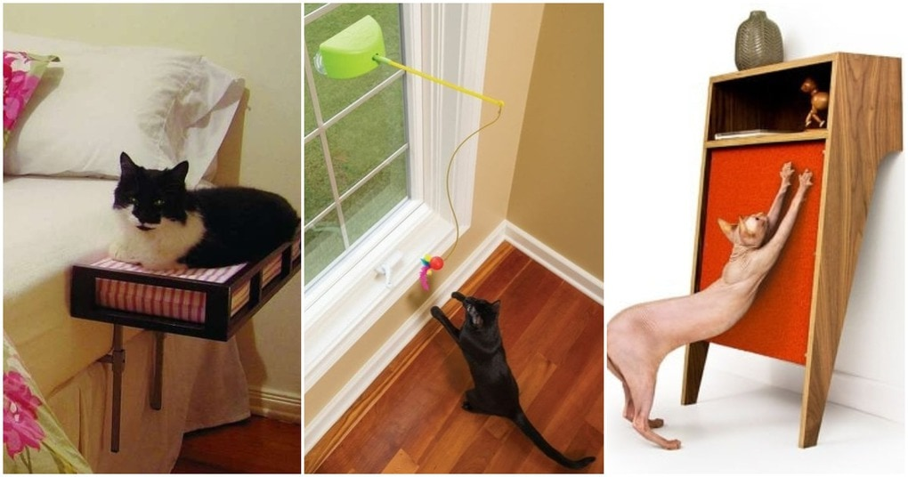 36 уникальных и малоизвестных вещей для любителей кошек