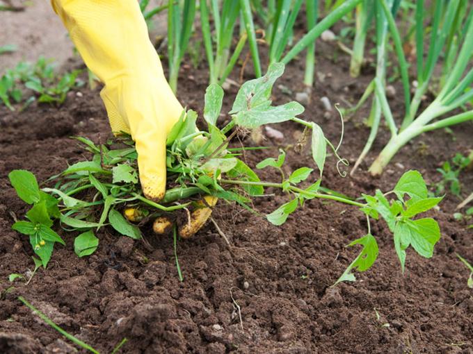 Наиболее «чистые» способы борьбы с сорняками