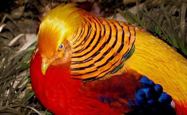 Буйство красок в мире птиц
