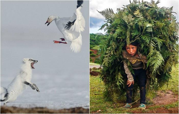 Люди, места и звери: 25 лучших снимков международного фотоконкурса Siena International Photography Awards 2017