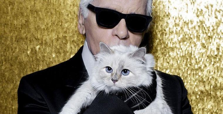 СМИ обсуждают, сколько унаследует кошка Лагерфельда