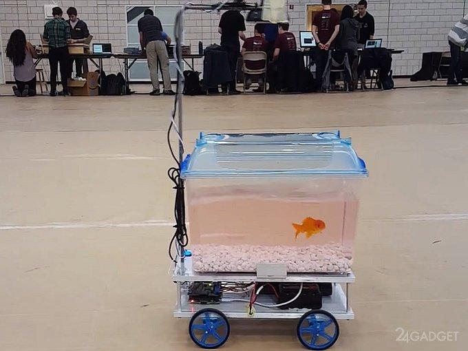 Рыбка управляет собственным аквариумом на колесах