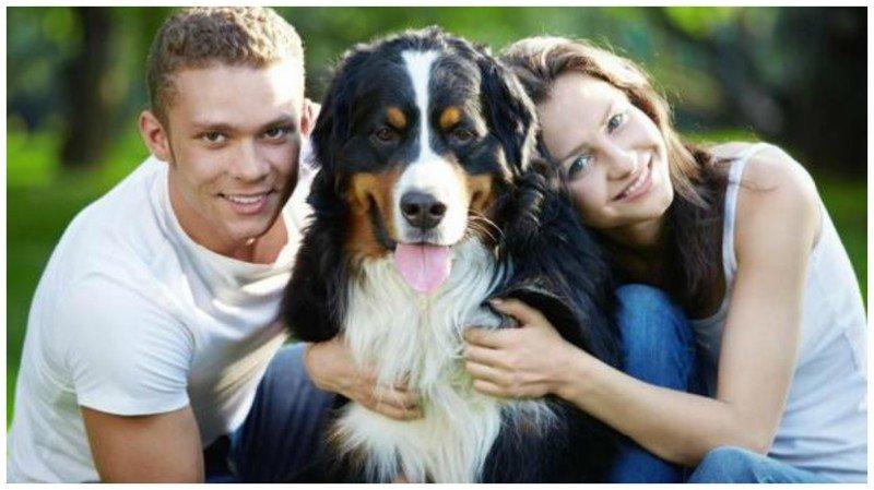 9. Фото Любовь, животные, ревность, собака