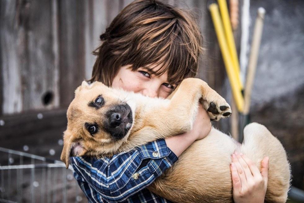 Ребёнок пролез сквозь колючую проволоку, чтобы спасти щенков