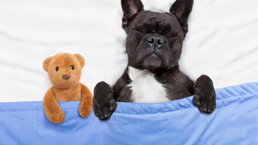 Что снится вашей собаке