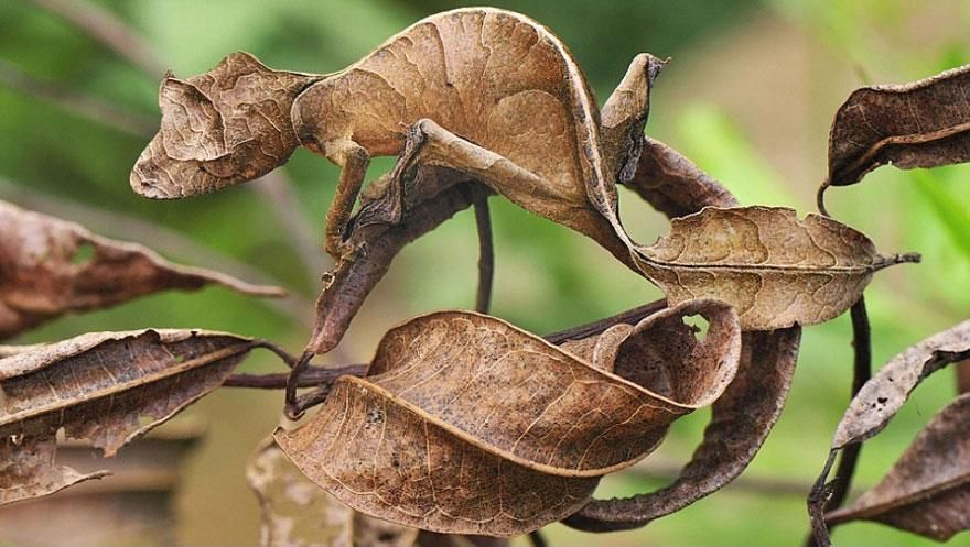 Camouflage14 Животные   мастера маскировки