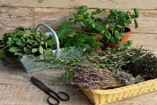 Ароматные травы полезные для здоровья