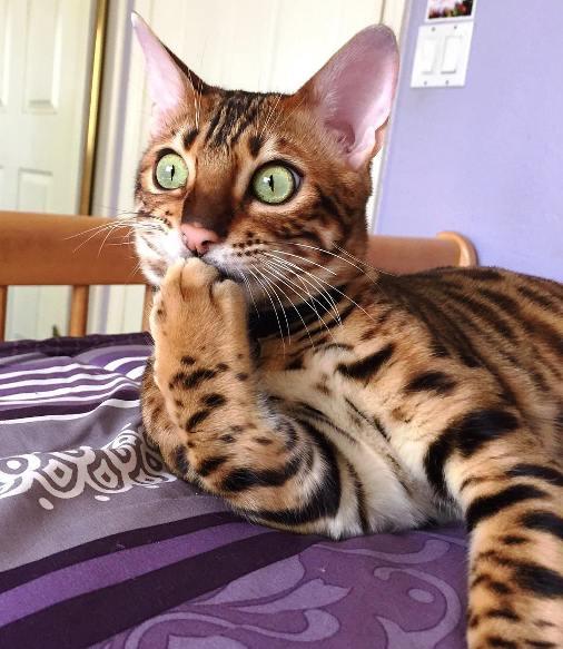 Сижу, гадаю… То ли кот сам настолько хитер, то ли им кто свыше управлял?