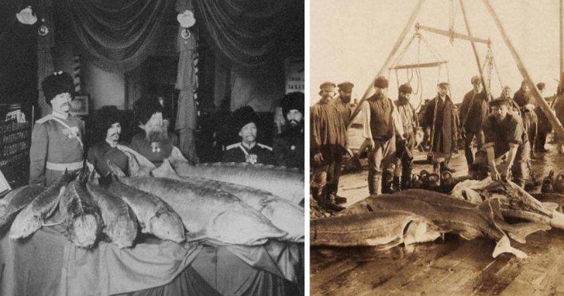 Российские рыбаки: что ловилось в старину (22 фото)