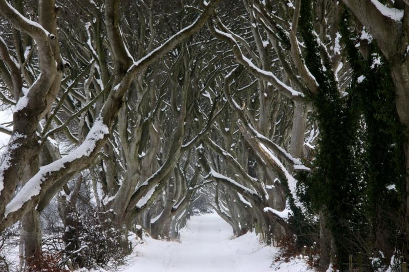 Сказочный лес или буковая аллея зимой. Фото