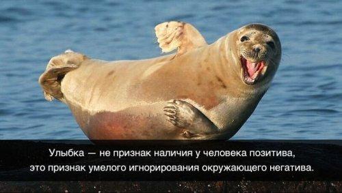 http://mtdata.ru/u5/photoC436/20852937159-0/original.jpg#20852937159
