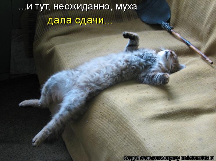 кошка ловит мух и ест что делать