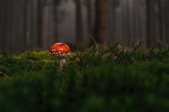 Грибник, заблудившись, почти две недели провел в лесу