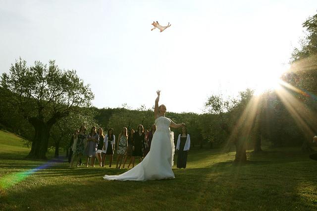 кошка невеста букет невесты 02 Последняя тенденция в свадебной моде! Вместо букета невесты   кошка!