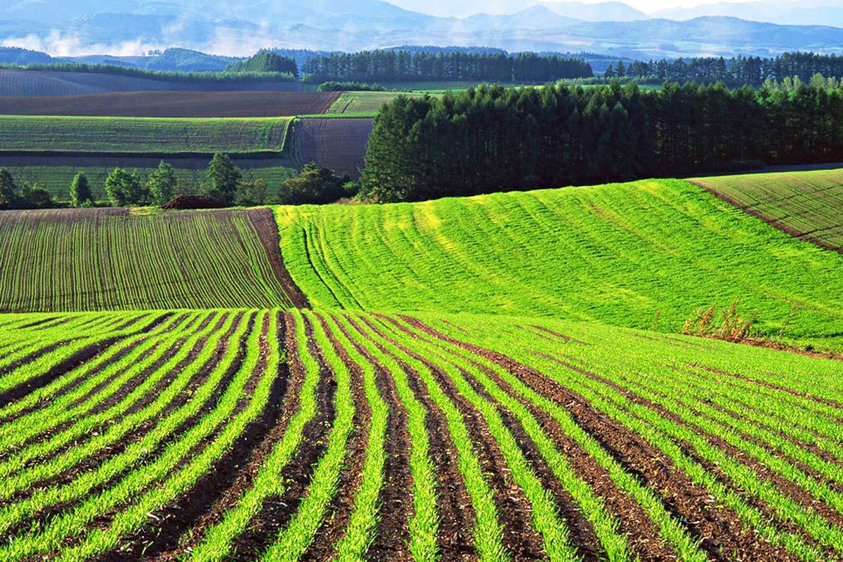 Инвестиции в сельское хозяйство России выросли на 10%