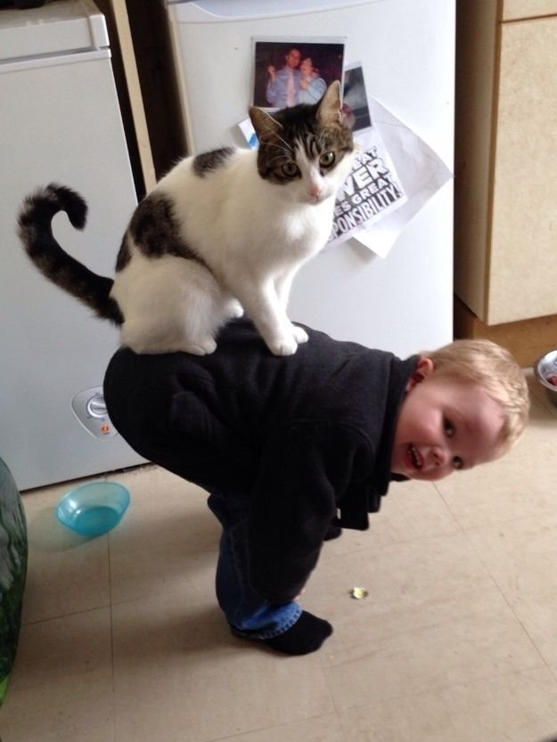 CatsGoldenHearts18 Почему мы любим кошек