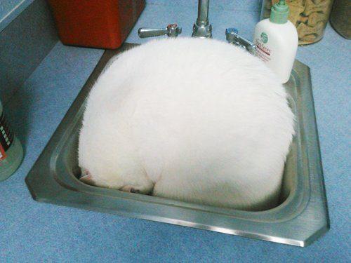 Кошки, которые спрятались от ветеринаров