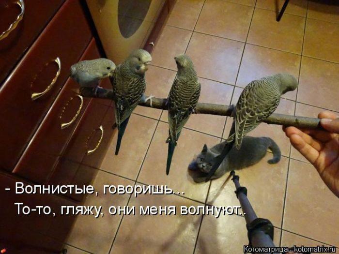 КОТОМАТРИЦЫ ДЛЯ ХОРОШЕГО НАСТРОЕНИЯ.