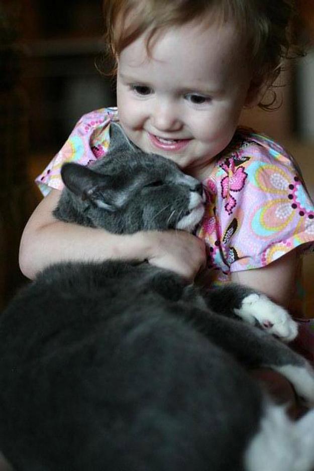 CatsGoldenHearts33 Почему мы любим кошек