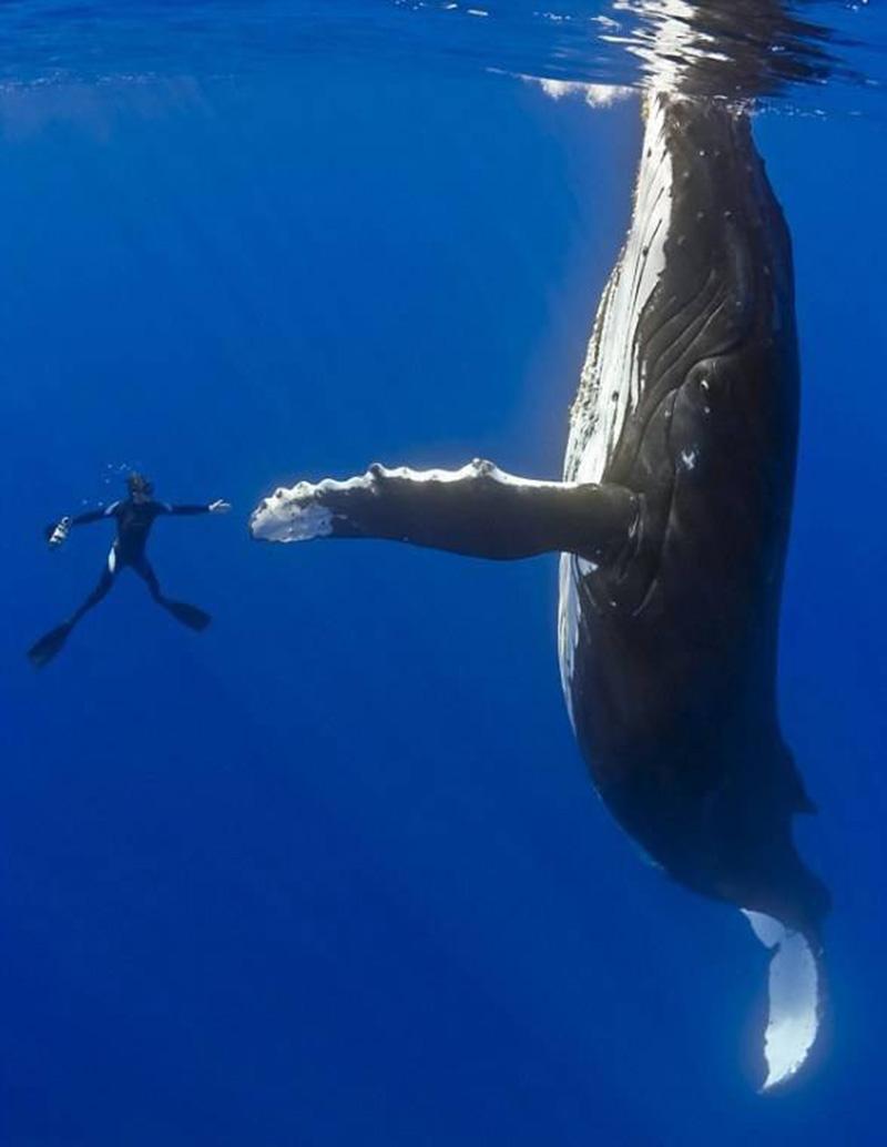 Как спят киты