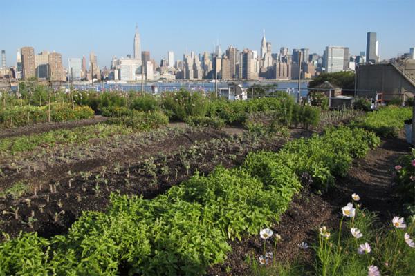 Вырасти сам: 6 городских ферм на крышах