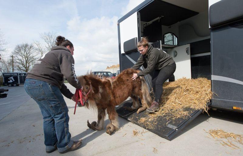 Копыта пони, которые не обрезали 10 лет