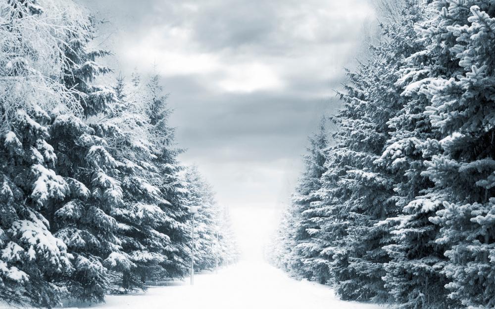 Новогоднее настроение на фотографиях и в стихах