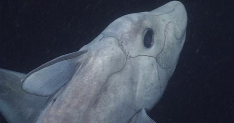 Жуткая древняя акула-призрак…