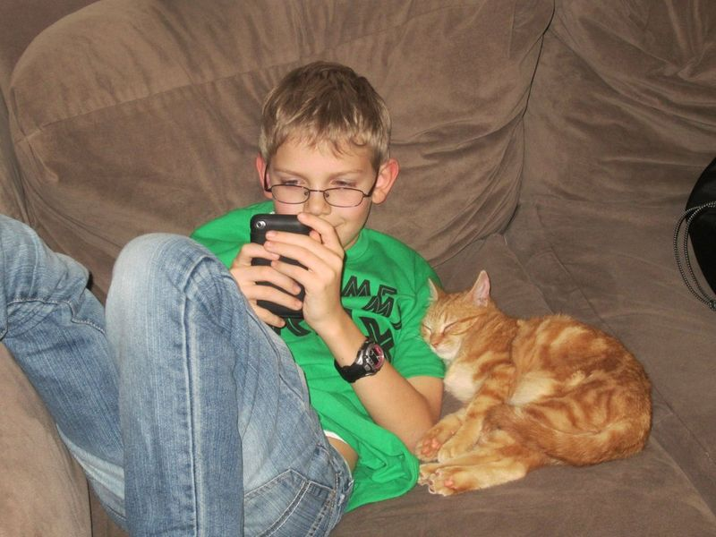 CatsGoldenHearts06 Почему мы любим кошек