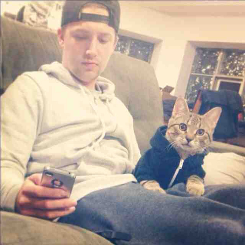 CatsGoldenHearts17 Почему мы любим кошек