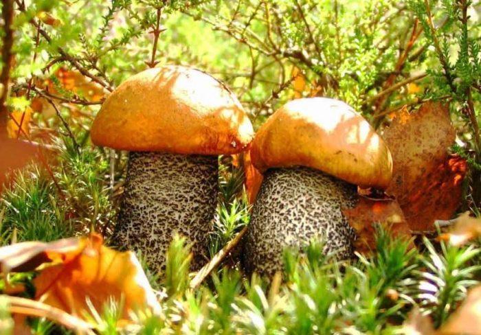 осенние грибы фото - 03