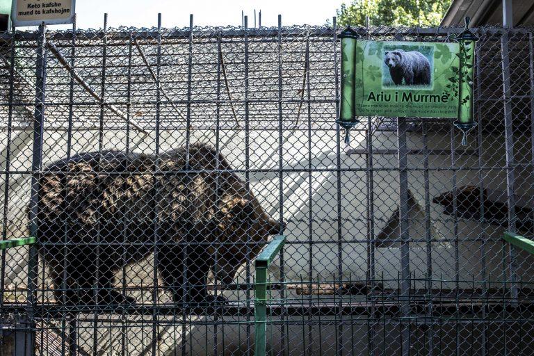 Два медведя, спасенные из ресторана в Албании, приехали в Швейцарию