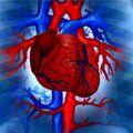 19 простых способов снизить риск сердечных заболеваний