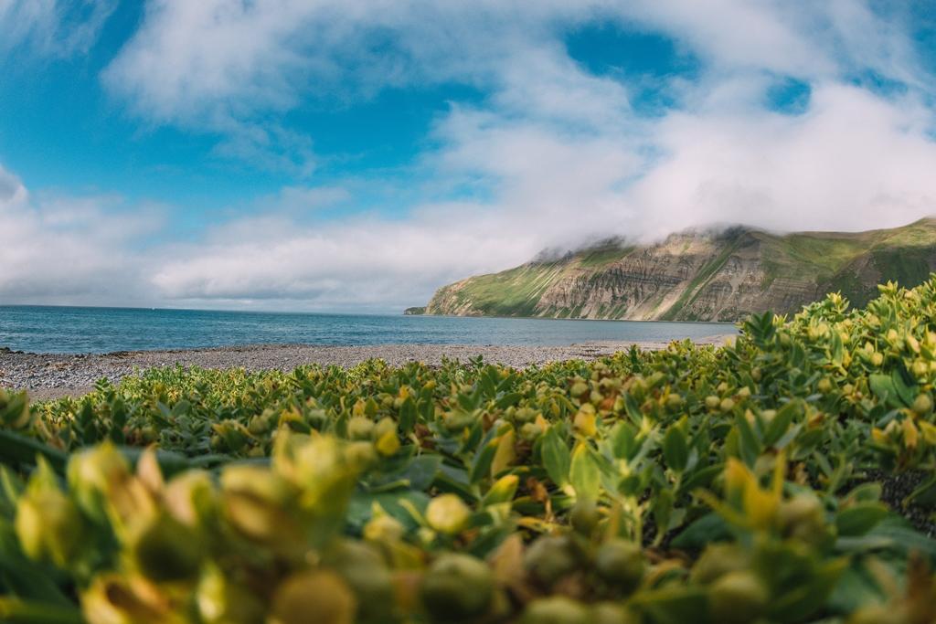 Командорские острова: край мира или рай на земле? — Вокруг света