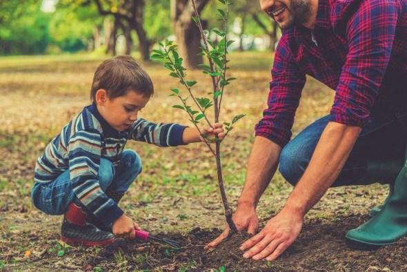 Что посадить в саду осенью