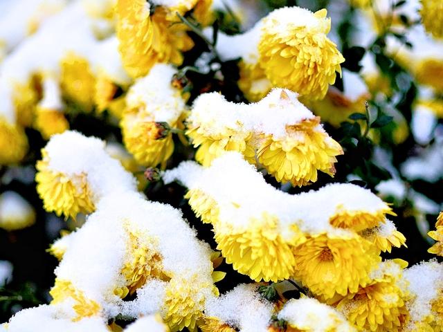 Весна придет, но не скоро
