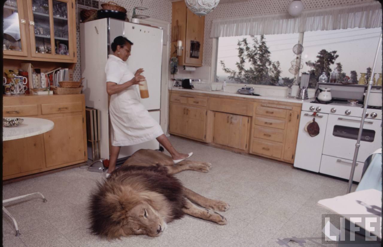 Фото льва в домашних условиях
