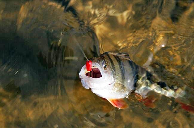 Рыбалка Ужение рыбы - Part 26