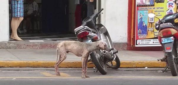 История спасения щенка, который медленно умирал на улице