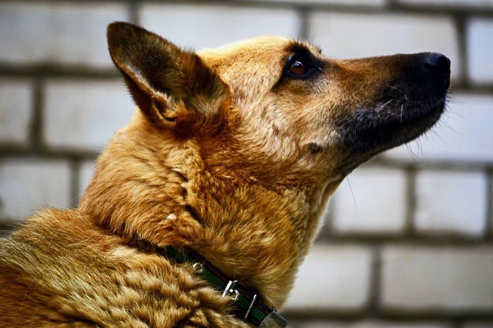 Ищем дом для дружища Петровича. Может, это ваш пес?
