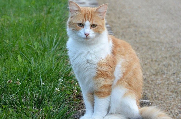 Турецкая кошка отказывается пускать в магазин мужчин и собак