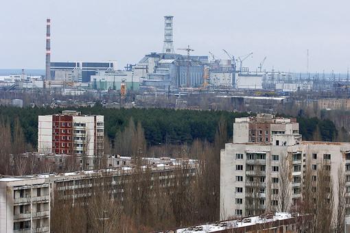 Косолапые возвращаются в Чернобыль